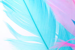 Colorful feather Royalty Free Stock Image