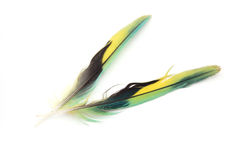 Colorful feather. Two colorful feather isolated on a white stock image