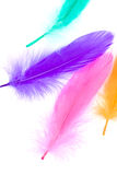 Colorful Feather Stock Photography