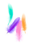 Colorful Feather Stock Images