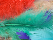 Colorful feather background Stock Photography