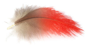 Colorful feather Stock Photos