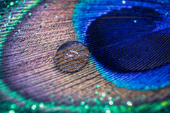 Colorful feather peacock with water drops and lights bokeh. Conc Royalty Free Stock Photo