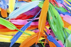 Colorful feather rainbow bird feathers. Goose dove duck parrot quill feathres... Rainbow colored background. Abstract royalty free stock photo