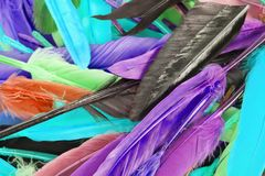 Colorful feather rainbow bird feathers. Goose dove duck parrot quill feathres... Rainbow colored background. Stock Photography