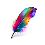 Colorful feather. On white background Stock Photos