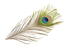 Colorful feathered tail of male peacock. Colorful feathered tail of a male peacock Royalty Free Stock Images