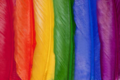 Colorful feathers. Background of lined up bird feathers in the various colors of the rainbow Royalty Free Stock Images