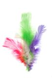 Colorful feathers. Isolated on white Royalty Free Stock Photos