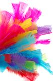 Colorful feathers. Isolated on white Royalty Free Stock Images