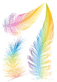 Colorful feathers. Set of smooth colorful feather Royalty Free Stock Images