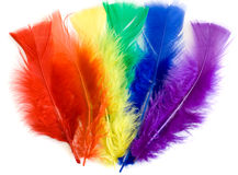 Colorful feathers. Over white background royalty free stock photography