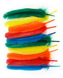 Colorful feathers. A line of colorful feathers on white background stock photo