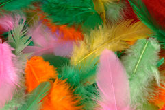 Colorful Feathers. Many colorful feathers as a background royalty free stock photography