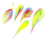 Colorful feathers Royalty Free Stock Photos