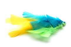 Colorful feathers. On white background Royalty Free Stock Photo