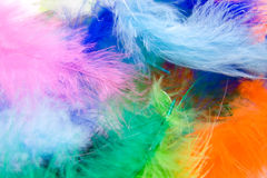 Colorful feathers Stock Images