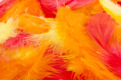 Colorful feathers background. Red, orange and yellow feathers background Stock Photo