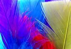 Colorful feathers background. A background of colorful feathers royalty free stock photos