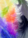 Colorful feathers background Royalty Free Stock Photo