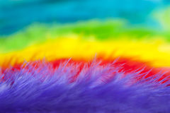 Colorful feathers background macro Royalty Free Stock Images