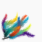 Colorful feathers background Stock Photography
