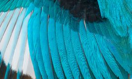 Colorful feathers, bird wing feathers background Stock Photography