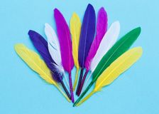 Colorful feathers stock photo