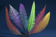 Colorful feathers on blue background Stock Images