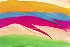 Colorful feathers close up Royalty Free Stock Images