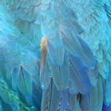 Colorful feathers, feature as background texture. Stock Images