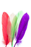 Colorful feathers isolated. On white royalty free stock images