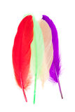 Colorful feathers isolated Royalty Free Stock Photos