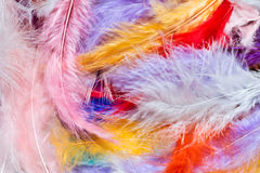 Colorful feathers. Multi-colored feathers as a background stock image