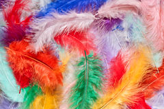 Colorful feathers. Multi-colored feathers as a background royalty free stock photo
