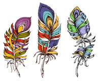 Colorful feathers. Peacock feathers in bright colors, decorative design elements royalty free illustration
