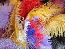 Colorful feathers. A photo of colorful feathers, great for a splash of color to your project stock images