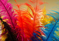 Colorful feathers. Picture of feathers in a variety of colors royalty free stock image
