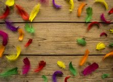 Colorful feathers on wooden table stock image