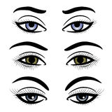Colorful female eyes and brows Royalty Free Stock Images