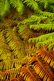 Colorful fern Royalty Free Stock Image