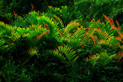 Colorful fern leaf. Photo colorful fern leaf tone in red yellow green background texture Stock Photos