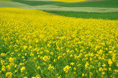 Colorful field background Stock Image