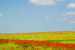 Colorful field Stock Photography