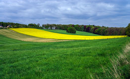 Colorful field landscape Stock Photo