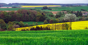 Colorful field landscape Royalty Free Stock Photos
