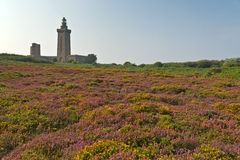 Colorful field of purple and yellow flowers with lighthouse in the background. Cape of Frehel. Brittany. Royalty Free Stock Photography
