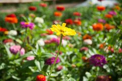 Colorful field of summer flowers royalty free stock photos