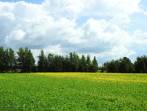 Colorful field in summer, Lithuania Royalty Free Stock Image
