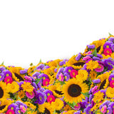 Colorful field of sunflowers and mums Stock Images
